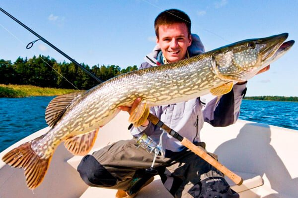Why do pike dreams of a man and a woman: a big live fish