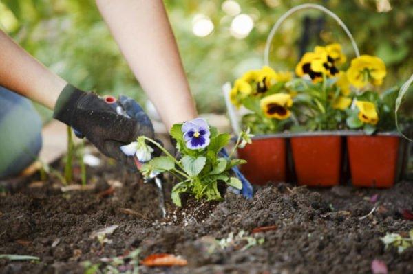 садить цветы в огороде