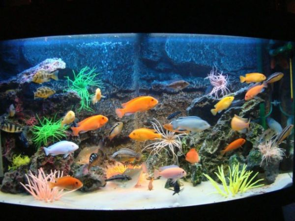 рыбы в аквариуме