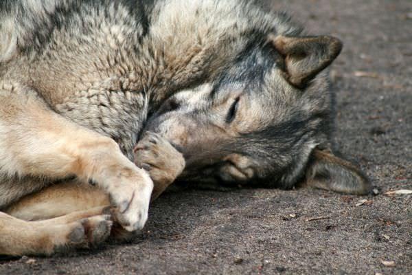 сонник толкование снов мертвая собака