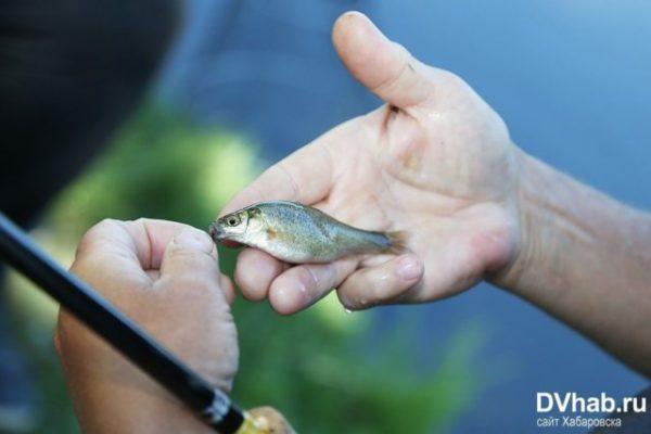 поймал очень маленькую рыбку