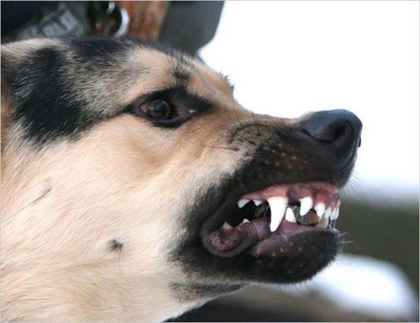 Сонник к чему снится собака которая кусает за руку
