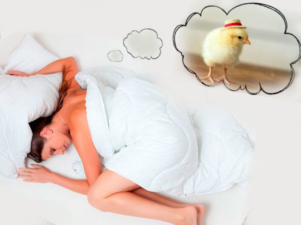 во сне приснился цыпленок