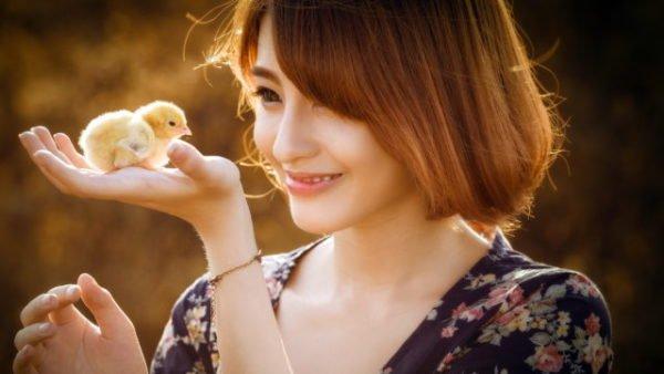 цыпленок и женщина
